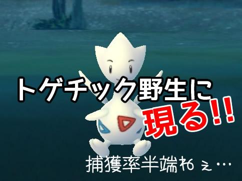 【ポケモンGO】金銀ジョウト地方「トゲチック」は野生で普通に出るぞ!捕獲率が半端ねぇ!