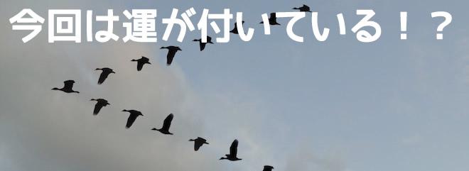 京都御所ワンリキーの巣